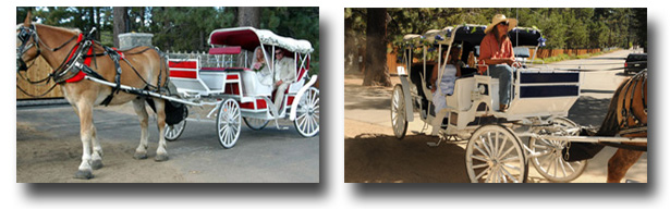 The horse and carriage approachs Lakeside Beach with the bride