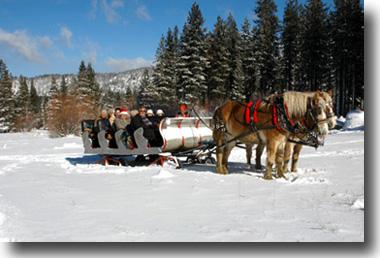 A team of horses pulls a sleigh across the snowy meadow