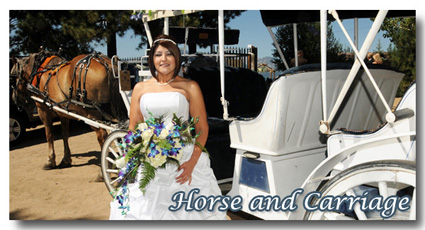 Visit the photo gallery of our horse and carriage weddings at Lakeside Beach